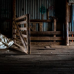 Julie Madders - THE SHEARING SHED