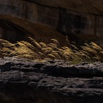 Wolf Marx - Golden Grasses