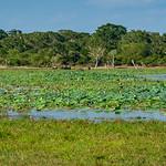 Marlene Chaitra - Wild Wetlands