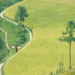 Helen Warnod - Xijiang pathways