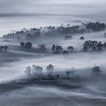 Trace O'Rourke - Yarra Fog