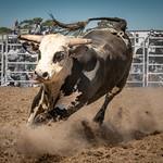 Vira Vujovich - Bull Dust