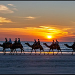 Ron Weatherhead - Camels at Sunset, Broome