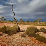 Alan Scott - Outback Morning