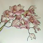Jill Anderson - Orchid
