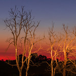 Julie Madders - TWILIGHT AT HILLVIEW