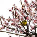 Trace O'Rourke - Blossom Bird