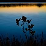 Steve Hilton - Noosa River Mangroves