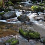 Donna Clarke - Tooronga River