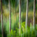 Marlene Chaitra - Blurred Tropical Forest