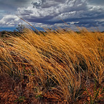 Alan Scott - Wind