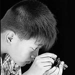 Jill Shaw - Boy examining a dragonfly