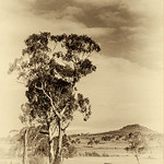 John Mallett - ARMIDALE COUNTRYSIDE