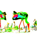 Anne Ramus - Painted Storks on a Lagoon (1 of 1)