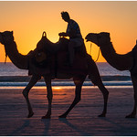 Ron Weatherhead - Camels at Sunset