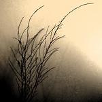 Donna Clarke - Bare branch
