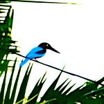 Anne Ramus - Kingfisher