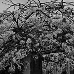 Nihal Basnayake - Spring