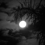 Lisa Li - Silent Night