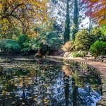 Michelle Golden - Alfred Nicholas Memorial Garden