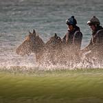Steve Hilton - Sea Horses