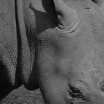 Donna Clarke - Rhino