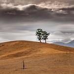 Vicki Moritz - Acheron 3 trees