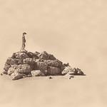 Richard Pilcher - Lone Sentinel Kalahari