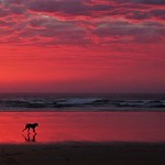 Jenny Sui - Dog in the pink sunset