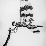 Hans Huysmans - Dragonfly Stick Dancer