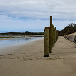 Colleen Singleton - Beach Erosion