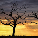 Alan Scott - The Early Birds