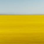 Jenny Sui - Field of Gold