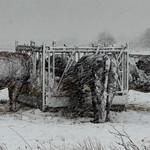 Geoff Shaw - Winter feeding