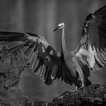 Alan Bennett - Wingspan