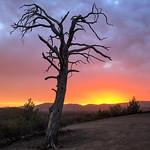 Trace O'Rourke - Ikara Sunrise
