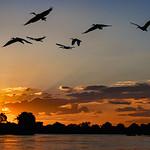 Ray Stabey - Zambezi Sunset