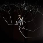 Geoff Shaw - Bathroom spider