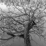 Michelle Golden - Fallen Tree