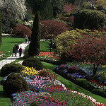 Donna Clarke - Buchart Gardens pano