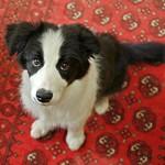 Wolf Marx - Rosie 4 Months
