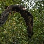 John Fairlie - On Wings