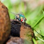 Michael Silverstein - Green Fly Resting