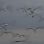 Donna Clarke - Seagulls