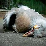 Phillip Harris - Decayed Bird