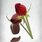 Steve Hilton - Dying Love