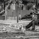 Sim Chong - Feeding Frenzy