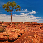 Alan Scott - Kings Canyon Gum
