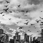 Phillip Harris - Hitchcock's Melbourne