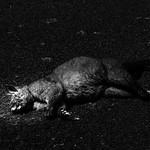Jill Shaw - Roadkill